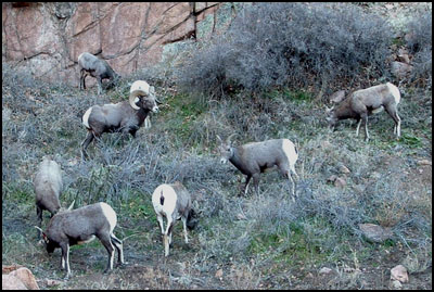 The Boys before a cold hunt